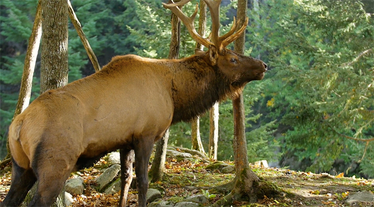 Application Period for Big Game Draw Permits & More Important Outdoor Dates