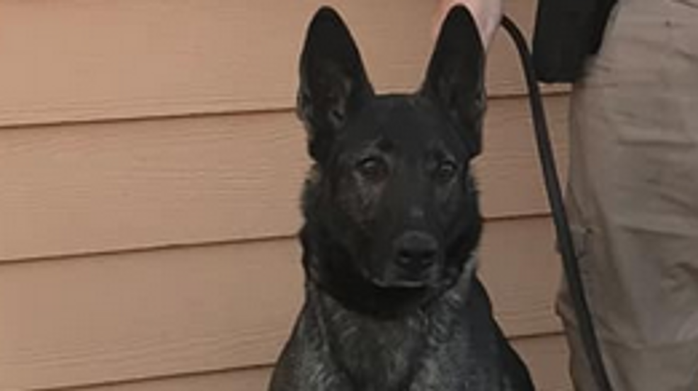 Dixon County Sheriff's Office mourns death of K-9 colleague