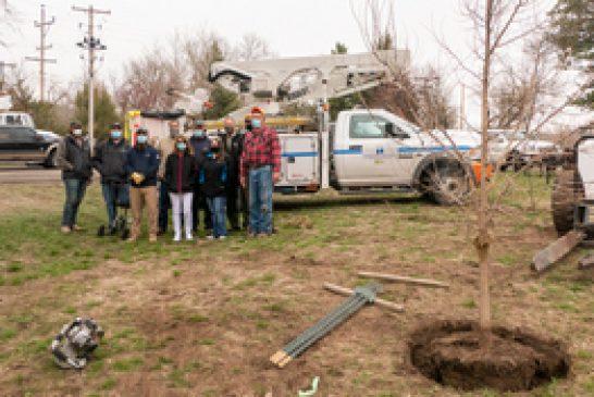 Nebraska Public Power District plants trees in Chadron State Park