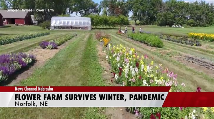 Flower farm survives historic winter, pandemic
