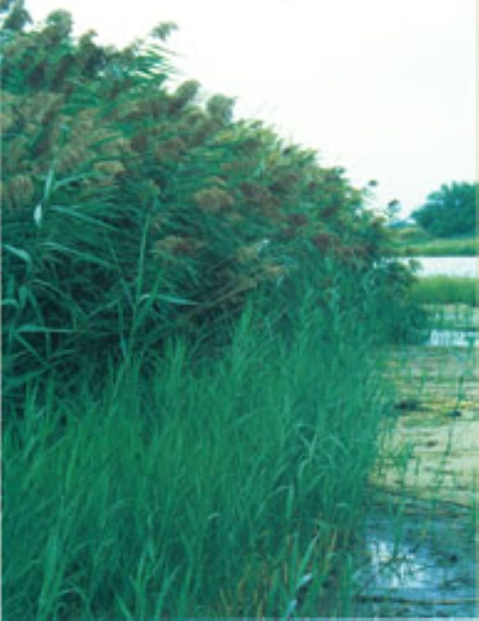 Gage County Weed Control report provides scorecard