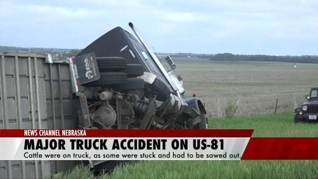 Several cattle injured, traffic halted after Highway 81 crash