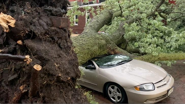 Downed trees damage property across Nebraska City