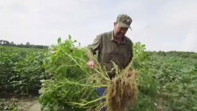Farmers facing herbicide shortage