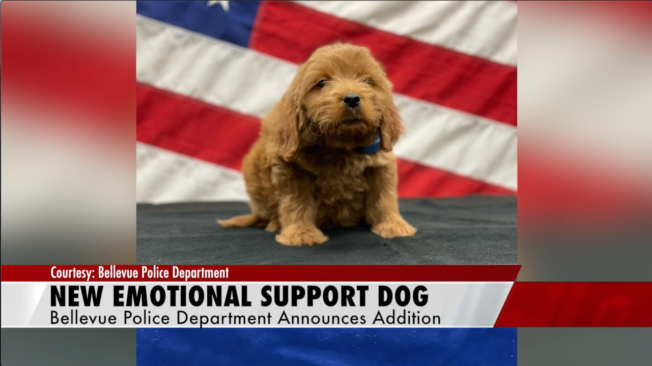 Goldendoodle to be certified therapy dog at BPD