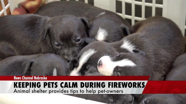 'Thundershirts': Exploring new ways to keep pets calm during fireworks