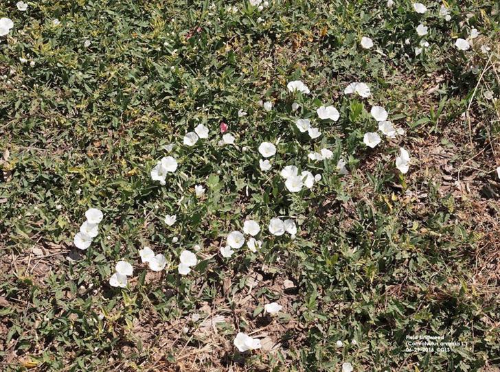 Sidney warns of spread of invasive plant species