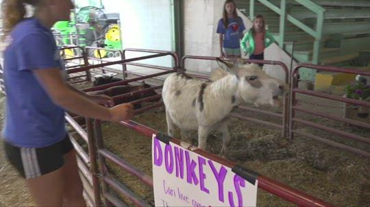 'A culmination': Platte County Fair begins