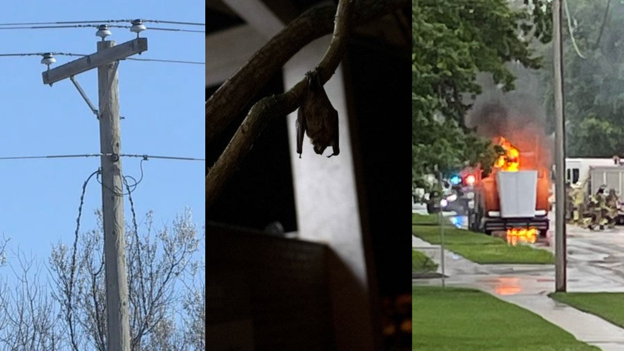 Severe weather, rabid bats and more: All of the biggest weekend stories