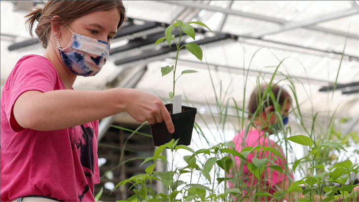 UNK undergrad greenhouse goal aims to improve crop yields
