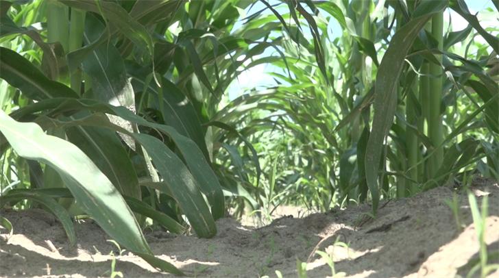 'Can't keep doing things the same way': Farmers face changes as nitrate levels increase