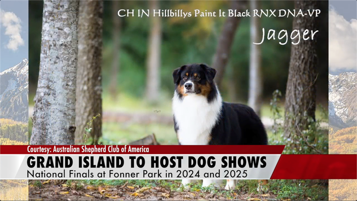 Grand Island to host Australian Shepherd dog shows in upcoming years