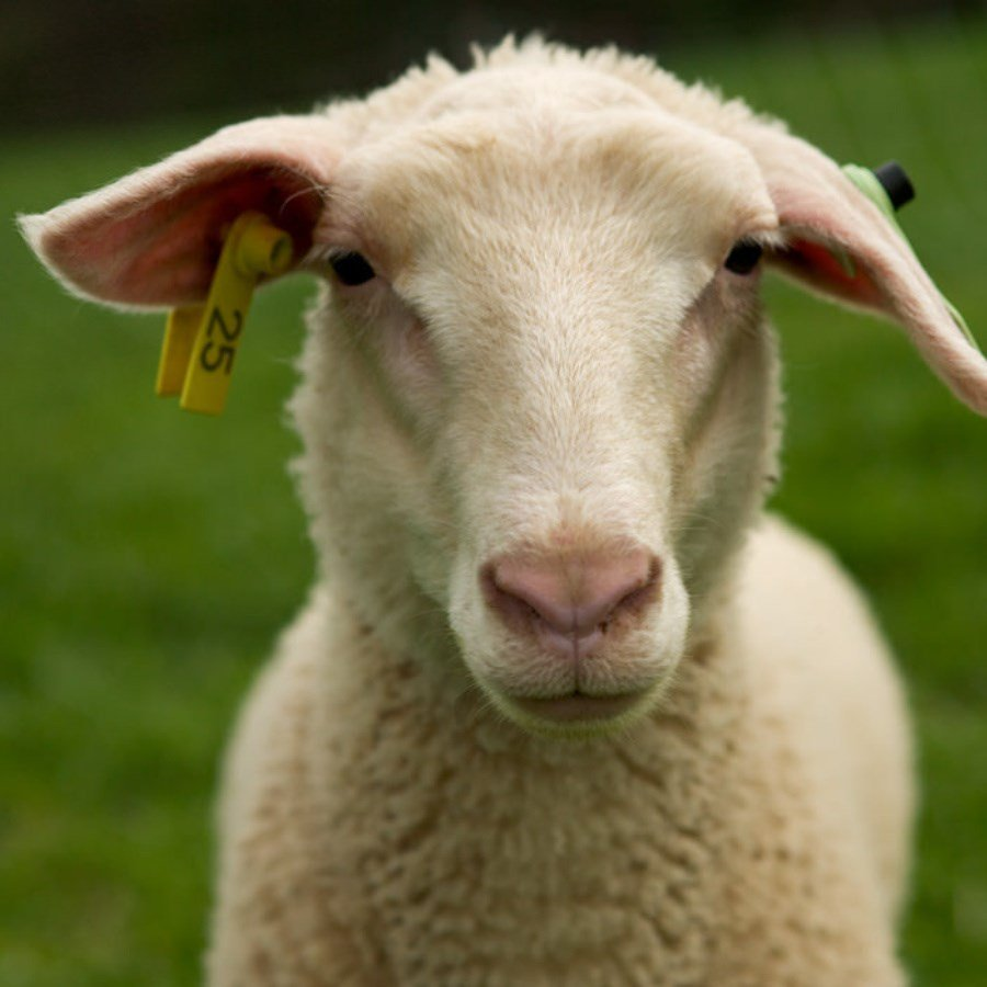 Nebraska sheep farmer indicted on federal bank fraud counts