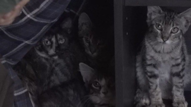 Winside family volunteering money, time to save dozens of cats
