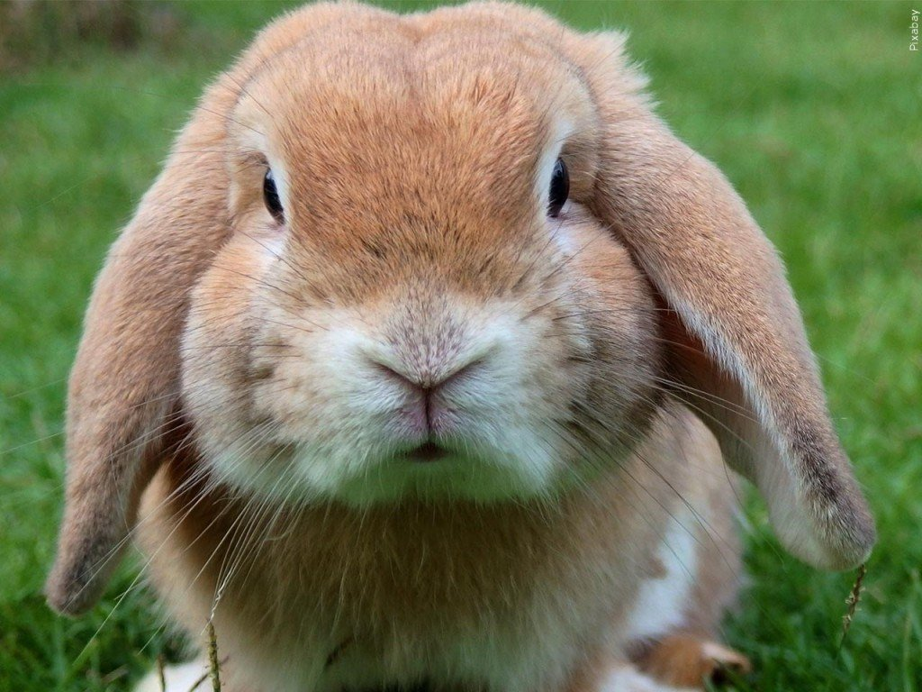8 rabbits rescued, 25 found dead in Omaha home