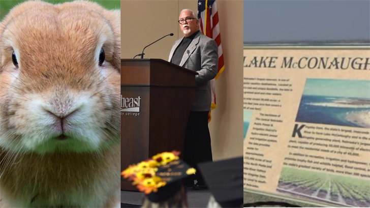 Rabbits rescued, NECC mask policy, minor party busted and more: All of the biggest weekend stories