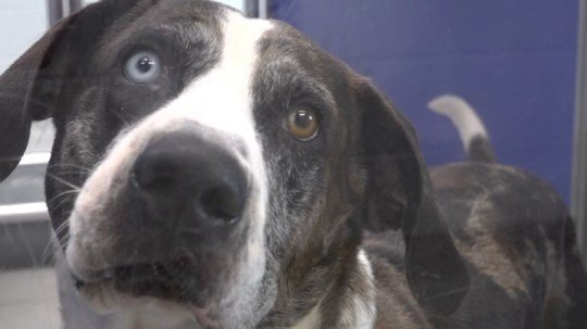 No kill shelter near capacity in dogs, cats due to natural disasters