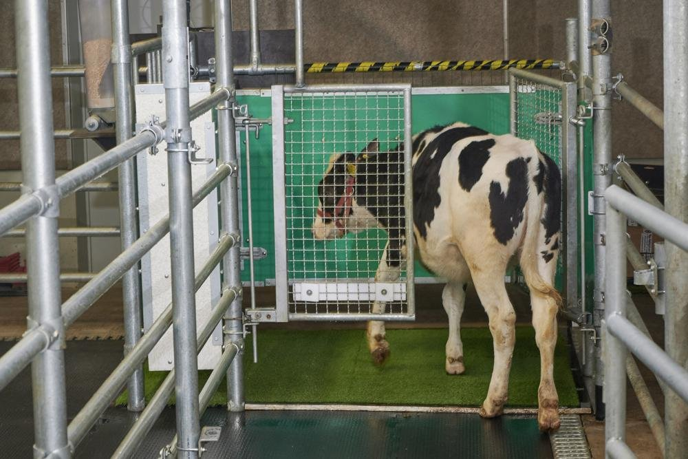 No bull: Scientists potty train cows to use 'MooLoo'