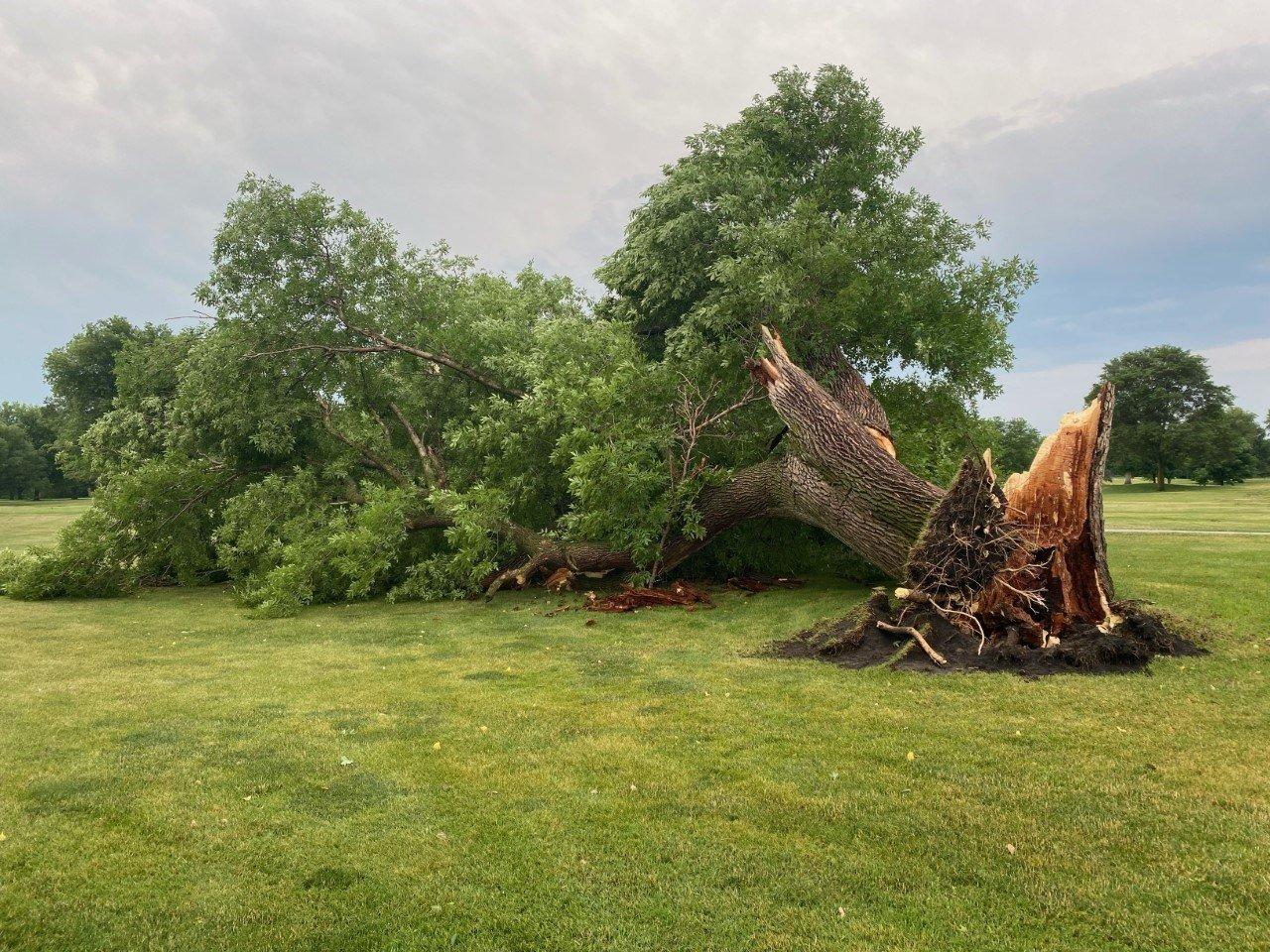 A photo of storm damage from the Norfolk Country Club